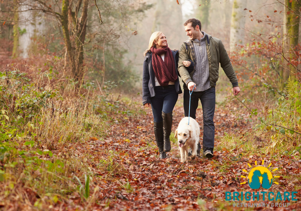 Dog-Friendly-Hikes-in-Ladera-Ranch
