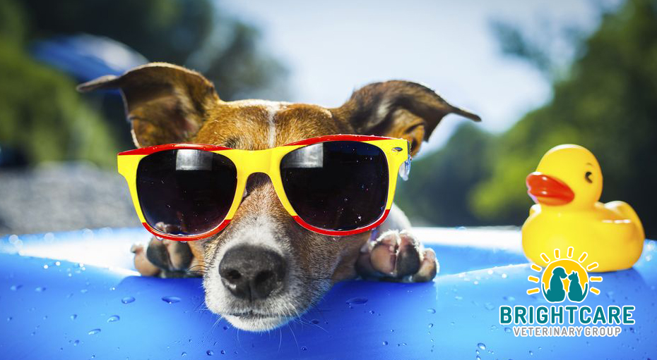 Keeping You Dog Cool in Summer