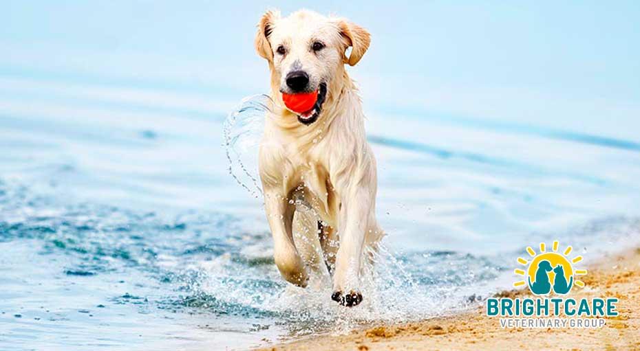 Dog Friendly Beaches in Orange County