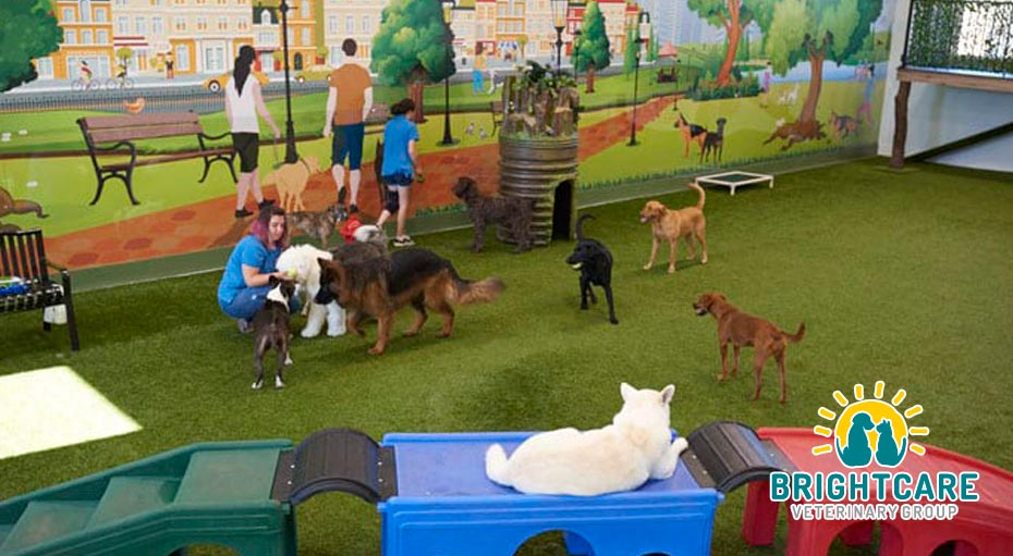Out of the Box Activities for Dog Lovers in Orange County