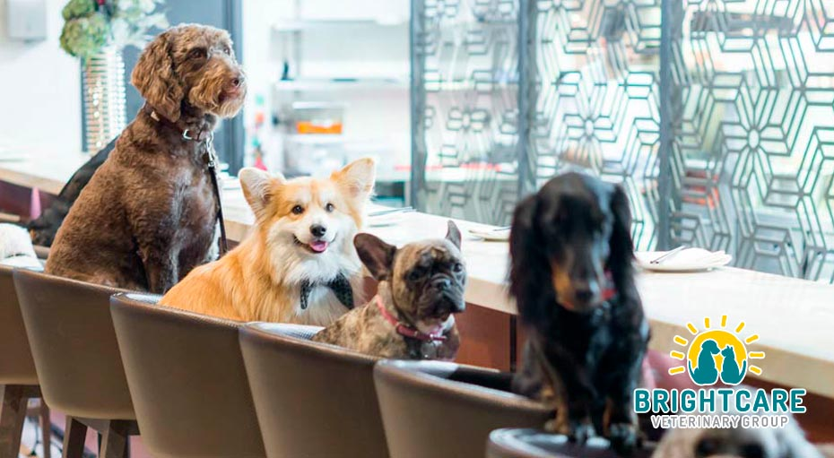 Dog-Friendly Restaurants in Mission Viejo