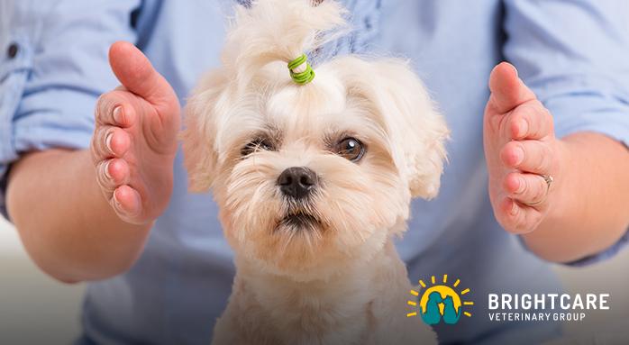 Veterinary Neurologist