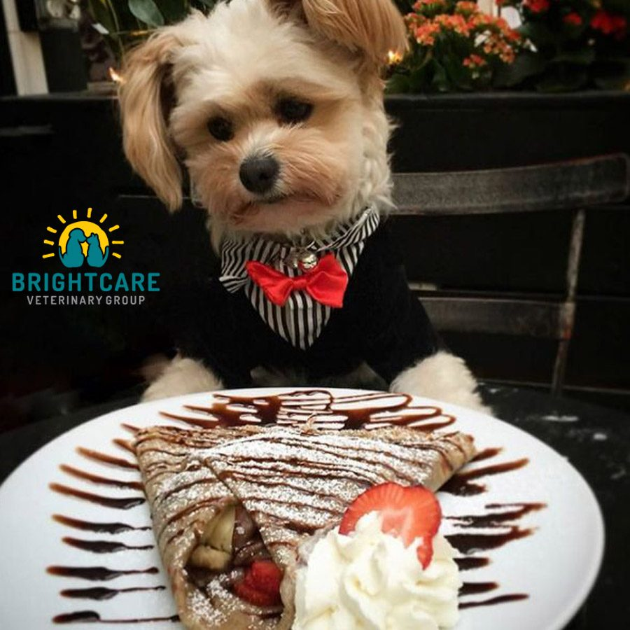 Top Dog Friendly Restaurants in Ladera Ranch