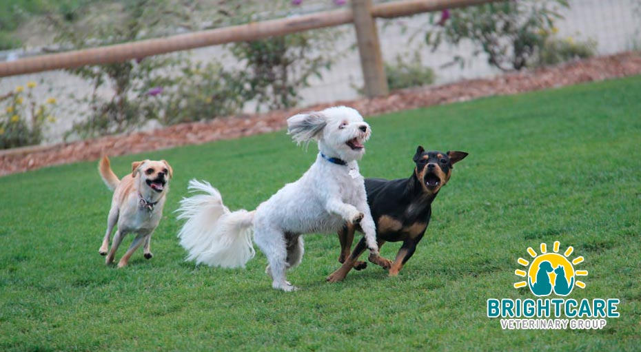 Planning for Holidays with pets in Rancho Santo Margarita