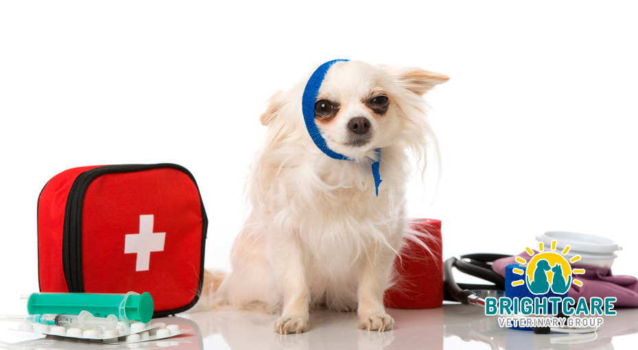 Why Call an Emergency Veterinarian