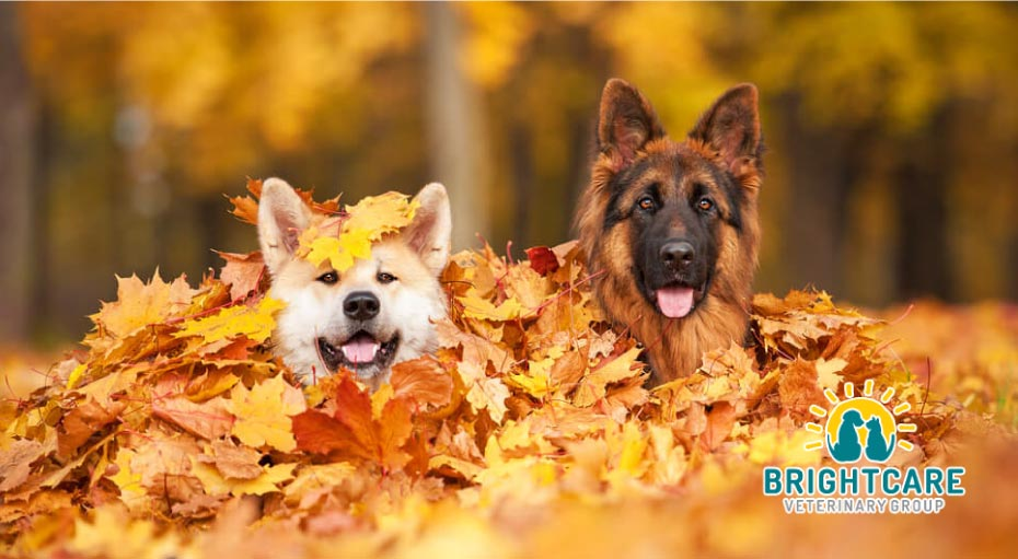 Pet Care Tips in Autumn from Emergency Vet in Mission Viejo, CA